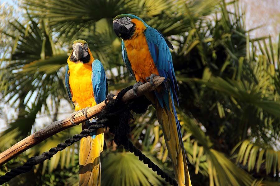 top 200 most popular parrot names pets happy hour